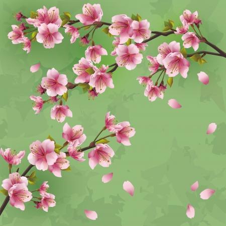 Vintage Japanese background with sakura blossom - Japanese cherry tree  Greeting or invitation card, vector illustration