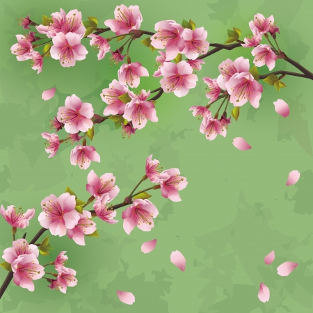 blossom tree: Vintage Japanese background with sakura blossom - Japanese cherry tree  Greeting or invitation card, vector illustration