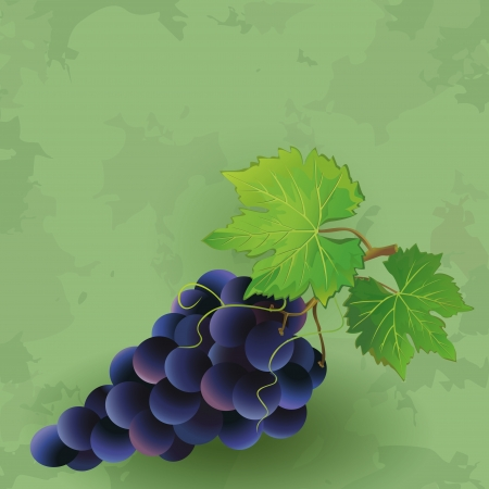 fruitful: Vintage green background with black grape  Vector illustration
