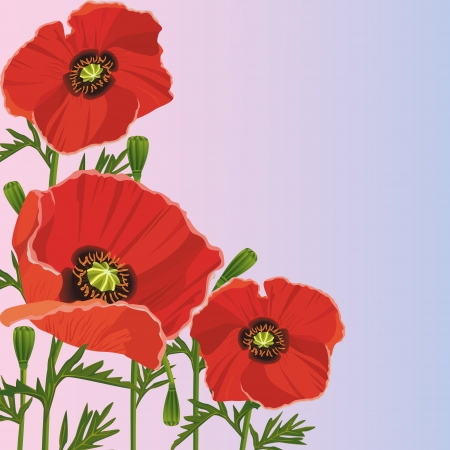 Beautiful purple background with flowers red poppies  Greeting or invitation card  Floral background  Vector illustration Vector