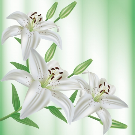 Greeting or invitation card with bouquet of flowers white lilies  Green floral background  Vector illustration
