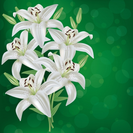 Greeting or invitation card with bouquet white lily flower   Vector