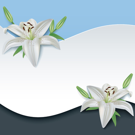 Greeting or invitation card with 3d flower white lily   Vector
