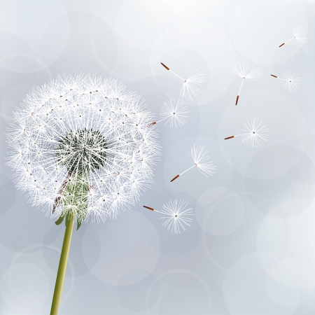 タンポポの花の美しい自然の壁紙の花のトレンディな背景