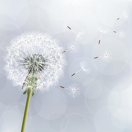 Fond à la mode florale avec des fleurs de pissenlit Beau fond d'écran de la nature Vecteurs