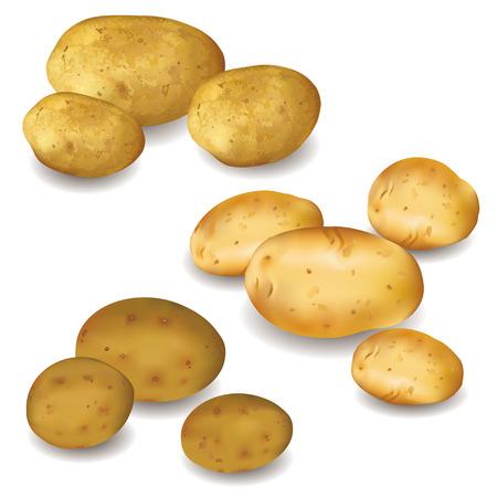 Conjunto de diferentes verduras patatas aisladas sobre fondo blanco Otoño cosecha ilustración vectorial