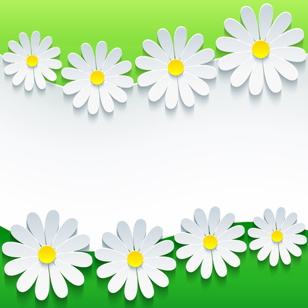 Stylish floral background, 3d flower chamomiles    Vector