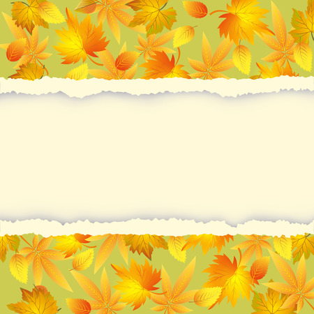 Beautiful autumn background with colorful leaves pattern  Green - yellow wallpaper with autumn leaf fall and torn paper - place for text  Vector illustration  Vector