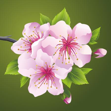 cliparts: Bloeiende tak van de Japanse kersenboom sakura roze. Mooie kersenbloesem, geïsoleerd op een groene achtergrond. Stijlvolle bloemen behang. Vector illustratie