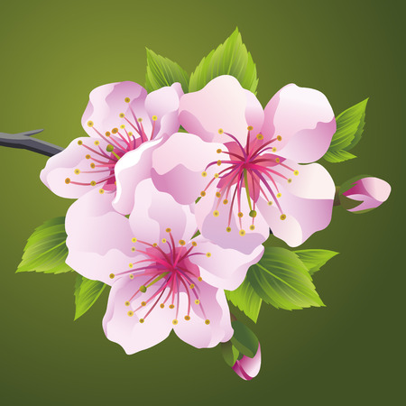 Blossoming branch of Japanese cherry tree sakura pink.  Beautiful cherry blossom, isolated on green background.  Stylish floral wallpaper.  Vector illustration