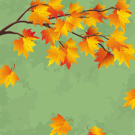 fall background: Vintage autumn wallpaper with branch of maple tree, leaf fall background  Vector illustration