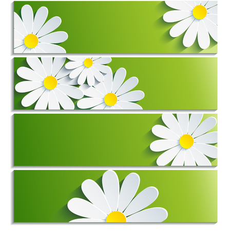 flower close up: Set of banners with 3d flower chamomile isolated on white background  Creative trendy green wallpaper with flowers chamomiles  Vector illustration Illustration