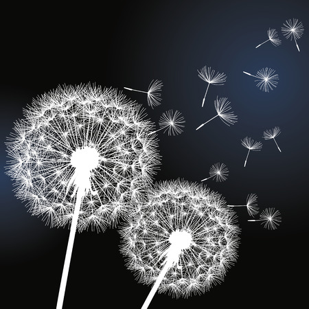 Stylish background with two white flowers dandelions on black background  Beautiful trendy romantic wallpaper  Vector illustration