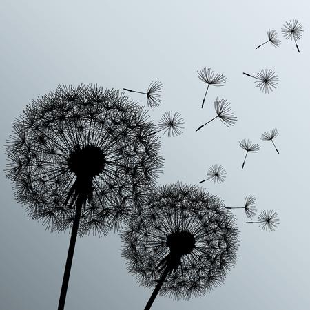 paisaje naturaleza: Fondo elegante con dos dientes de Le�n flores negras sobre fondo gris Hermosa pintado rom�ntico de moda ilustraci�n vectorial