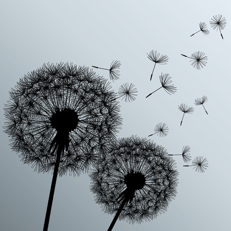 dandelion wind: Stylish background with two black flowers dandelions on grey background  Beautiful trendy romantic wallpaper  Vector illustration