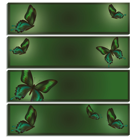 gloss banner: Set of beautiful bright green banner with Chinese gloss swallowtail butterflies in a top view and a side view, isolated on white background  Stylish trendy wallpaper  Vector illustration