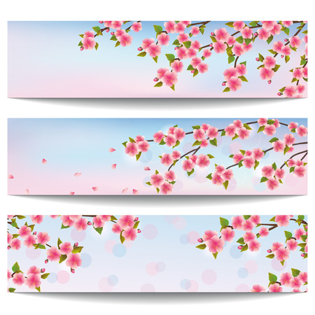 Set of stylish horizontal banners with blossoming pink sakura- japanese cherry isolated on white background  Beautiful floral wallpaper  Vector illustration Vector
