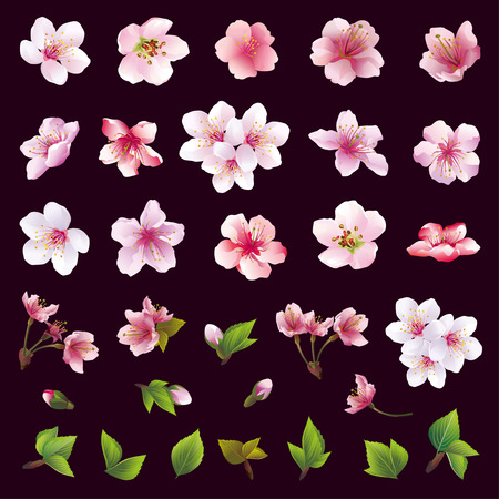 vector ornaments: Big set of different beautiful cherry tree flowers and leaves isolated on black background. Collection of white pink  purple sakura blossom  japanese cherry tree.  Elements of floral spring design. Vector illustration