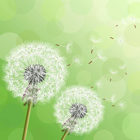 Fondo con estilo moderno naturaleza con dos dientes de León flores y pelusa volar. Moderno fondo verde floral con lugar para el texto. Primavera o verano wallpaper hermosa abstracta. Ilustración vectorial