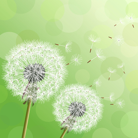 Stylish modern nature background with two flowers dandelions and flying fluff. Trendy floral green background with place for text. Abstract beautiful spring or summer wallpaper. Vector illustration Stock Illustratie