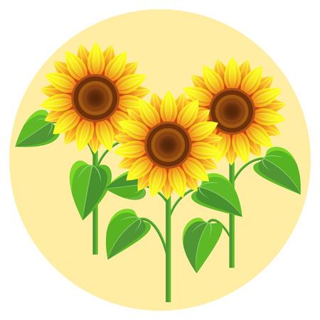 黄色の円に 3 つのヒマワリと、美しい自然の背景。様式化された夏の花は、白い背景で隔離。スタイリッシュな花の壁紙。ベクトル図