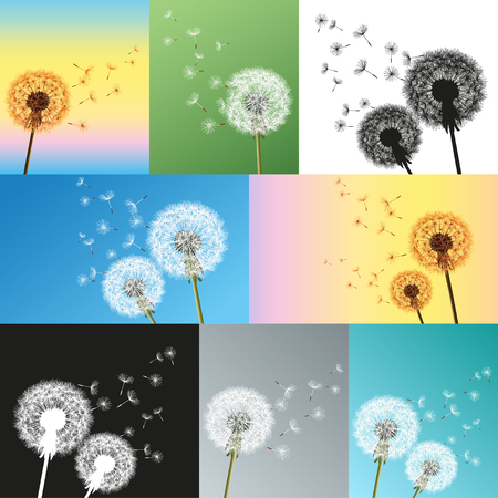 blue dandelion: Set of dandelion blowing seeds isolated. Beautiful stylish nature background with flowers dandelions and flying fluff. Trendy floral summer or spring wallpaper.