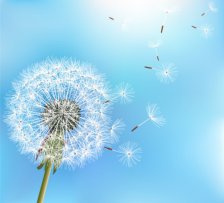 blowing of the wind: Stylish nature blue background with flower dandelion blowing seeds. Trendy floral summer or spring wallpaper. Vector illustration
