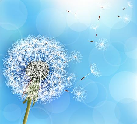 fond bleu Trendy lumière nature avec des graines de fleurs de pissenlit soufflant. été floral élégant ou le papier peint de printemps. Vector illustration