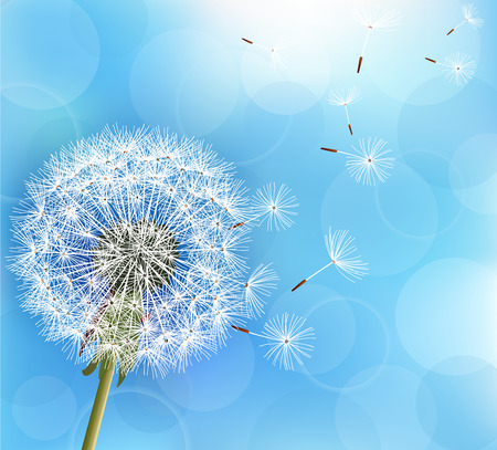 Trendy nature light blue background with flower dandelion blowing seeds. Stylish floral summer or spring wallpaper. Vector illustration Vettoriali