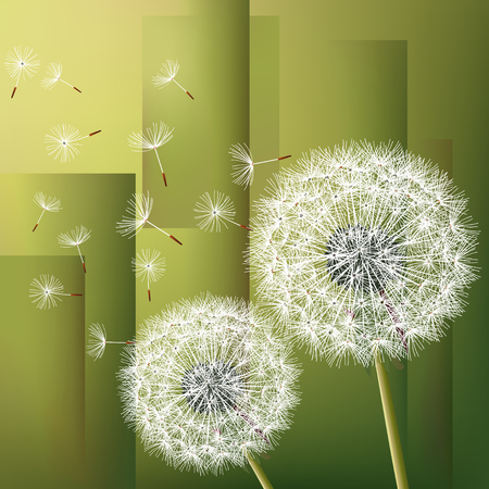 fluff: Stylish modern geometric green background with two flowers dandelions and flying fluff. Abstract trendy floral wallpaper. Vector illustration