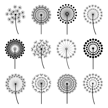 Set of black dandelion fluff isolated on white background. Stylized summer or spring flowers, floral design elements, icons. Vector illustration 矢量图像