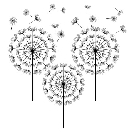 fluff: Three black dandelions with flying fluff isolated on white background. Stylized summer or spring flowers, floral design elements, icons. Vector illustration