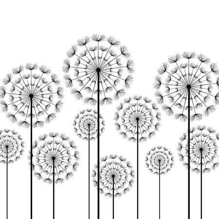 beauty of nature: Black stylized dandelions isolated on white background. Floral stylish trendy wallpaper with summer or spring flowers. Modern backdrop. Beauty of nature. Vector illustration