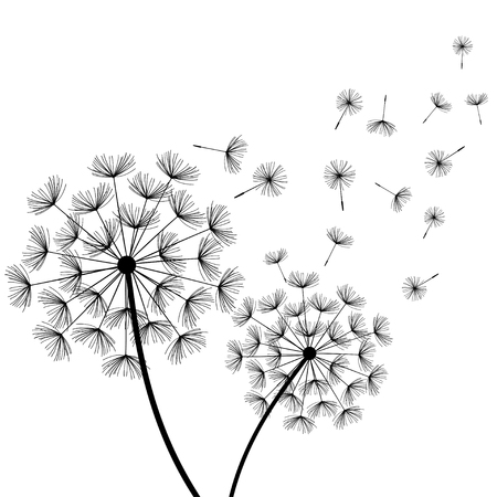 Beautiful nature white background with two stylized black dandelions and flying fluff. Floral stylish trendy wallpaper with summer or spring flowers. Modern backdrop. Vector illustration