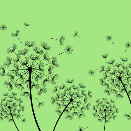 overblown: Beautiful nature green background with black dandelions and flying fluff. Floral stylish trendy wallpaper with summer or spring flowers. Modern backdrop. Vector illustration Illustration