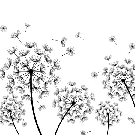 fluff: Beautiful nature white background with black dandelions and flying fluff. Floral stylish trendy wallpaper with summer or spring flowers. Modern backdrop. Vector illustration Illustration