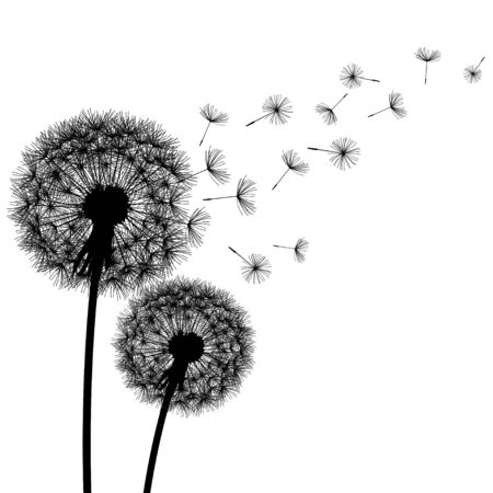 fluff: Two black dandelions silhouette with flying fluff.