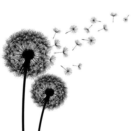 Two delicate black dandelions silhouette with flying fluff on white background. Floral modern stylish wallpaper with summer or spring flowers. Beautiful trendy nature backdrop. Vector illustration Illustration