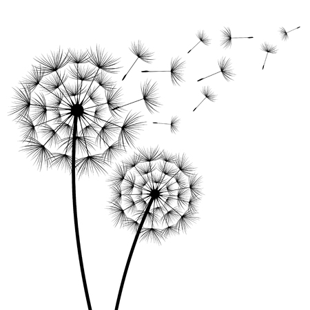 Two stylized black dandelions silhouette with flying fluff on white background. Floral stylish modern wallpaper with summer or spring flowers. Beautiful trendy nature backdrop. Vector illustration  イラスト・ベクター素材
