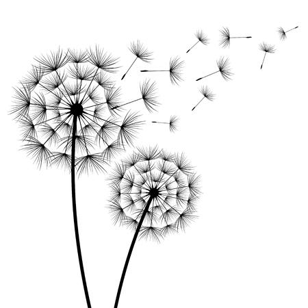 Dwa stylizowane czarne dandelions sylwetka z latania puch na białym tle. Kwiatowy stylowy nowoczesny tapeta z letnich lub wiosennych kwiatów. Piękne tło modny charakter. Ilustracji wektorowych