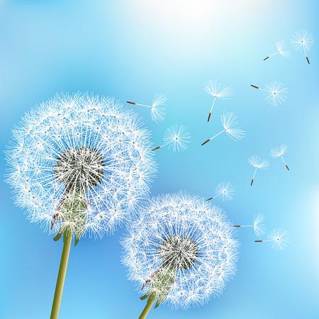 Elegante fondo azul de la naturaleza con dos flores de diente de león soplando semillas. Primavera floral de moda o papel pintado de verano. Ilustración vectorial