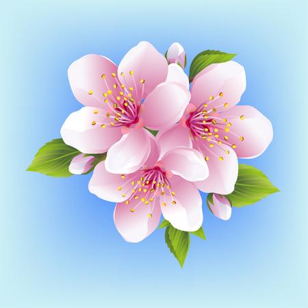 Beautiful white pink sakura blossom vector illustration.