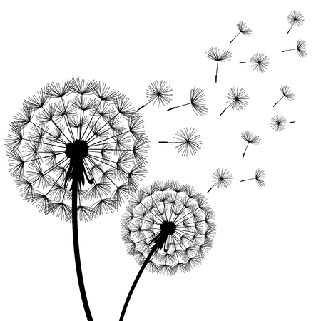 Black and white dandelions illustration. Stock Illustratie