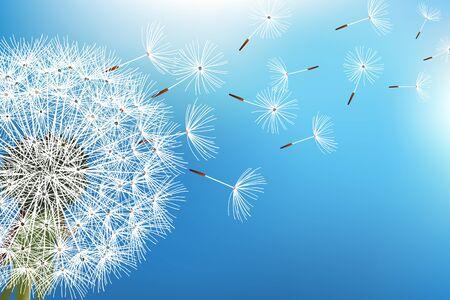 Azul na moda do fundo da natureza com as sementes de sopro do dente-de-leão. Papel de parede floral com flor de verão ou primavera e fluff a voar. Pano de fundo elegante. Ilustração vetorial