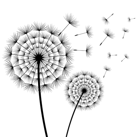 Beautiful stylish nature white background with two stylized black dandelions blowing isolated. Floral trendy wallpaper with summer, spring flowers and flying fluff. Modern backdrop, vector Illustration