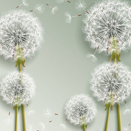 Trendy beautiful nature background with 3d dandelions blowing. Floral stylish elegant wallpaper with summer or spring flowers and flying fluff. Graphic design. Vector illustration