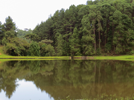Tranquil lake with grass around it and with reflection of pine forest in the background.