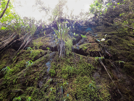 View underneath vegetation and moss on cliff, the shade in sunny day.