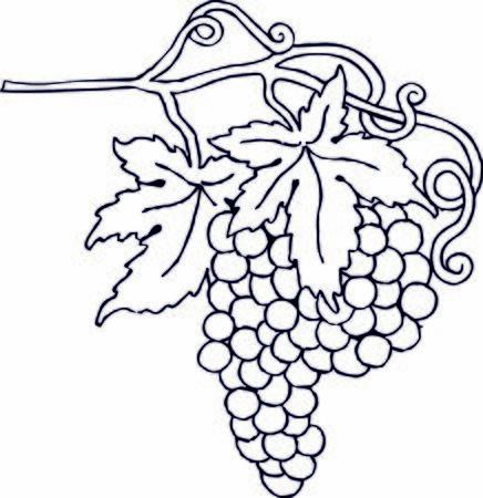 Illustration grape wine winery   illustration
