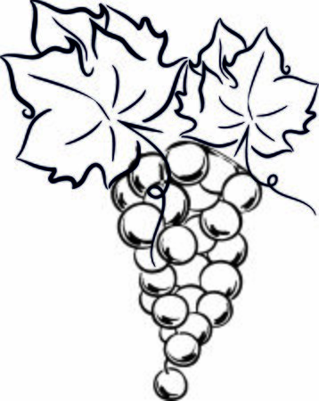 Illustration grape wine winery logo illustration